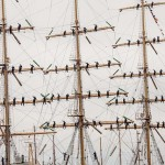 cele mai frumoase fotografii de la regata marii negre 20144