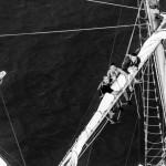 regata marii negre 2014 - parada velelor (9)