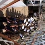 regata marii negre 2014 - parada velelor (64)
