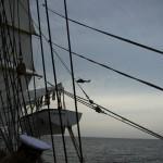 regata marii negre 2014 - parada velelor (91)